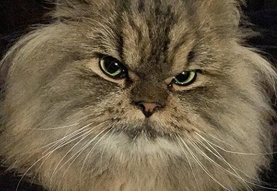 Bilzerian Cat